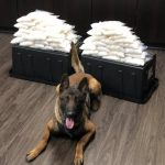 California police dog sniffs out 60 pounds of meth inside car in first bust