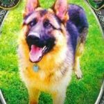 Long Island police dog killed in crash after chase