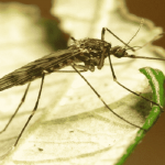West Nile Virus is a Threat - Veterans Today | News