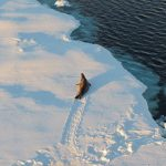 Explosion in Antarctic sea ice levels may cause another ice age